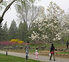 Enjoying April's magnolia blossom, Ritan Park, Beijing, China by Philip Mitchell
