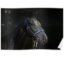 God's Shadow - Australian Racehorse Poster