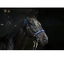 God's Shadow - Australian Racehorse Photographic Print
