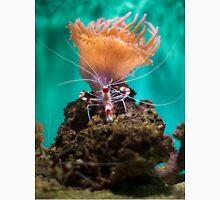 Shrimp Climbing An Anemone Unisex T-Shirt