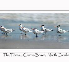 Carova Terns by Florence Womacks