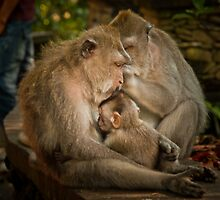 And Baby makes three by Keith Irving