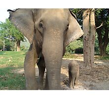 Elephant and baby in Thailand Photographic Print