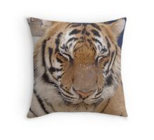 Tiger sleeping Throw Pillow