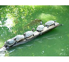Turtles Photographic Print