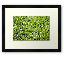 Beautiful Lily of the Valley flowers Framed Print