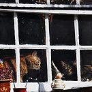 Clovelly Cats by Karen E Camilleri
