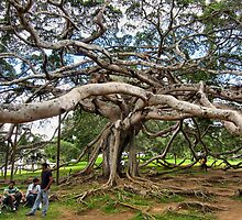 THE UGLY TREE. SRI LANKA. by ronsaunders47