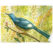 Earthy blue white Squire bird Poster