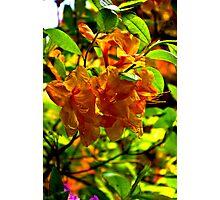 Orange Rhododendron Photographic Print