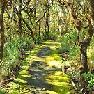 A Mossy Track by Penny Smith