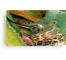 A Nest on Thorns! Amazing! Please Read.. Canvas Print