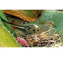 A Nest on Thorns! Amazing! Please Read.. Photographic Print