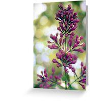 Lilac Bokeh Greeting Card