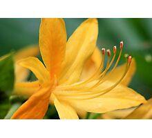 Macro Flowers Photographic Print
