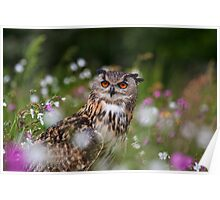 Owl in the meadow Poster
