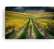In Vino Veritas IV Canvas Print