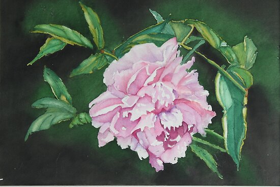 Pink Peony  by Christiane  Kingsley