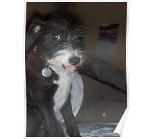 Dog Posing for Portrait Poster