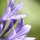 Purple flowers 7079 by João Castro