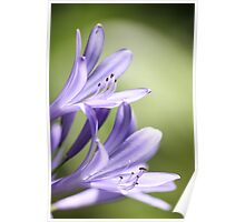 Purple flowers 7079 Poster