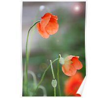 Picture Perfect Poppies Poster