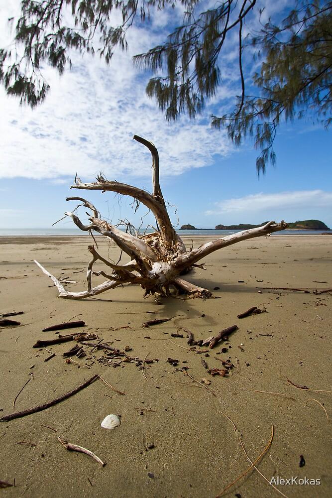 """Tree Wrecked"" after Cyclone Ului by AlexKokas"