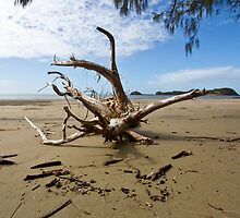 """Tree Wrecked"" after Cyclone Ului by AlexKokas"