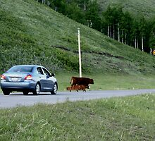 Rush hour in Kananaskis Country by David M. Bull