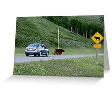 Rush hour in Kananaskis Country Greeting Card