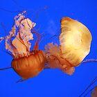 Jellyfish - Akron Zoo by Katherine Haluska