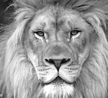 King of Beasts Portrait by Katherine Haluska