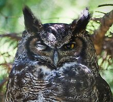 *Wink* ;) by Stephen Rowsell