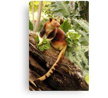 Goodfellows' Tree Kangaroo Canvas Print