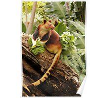 Goodfellows' Tree Kangaroo Poster