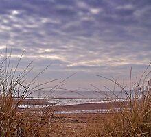 Wind Swept Beach Grass. by Aj Finan