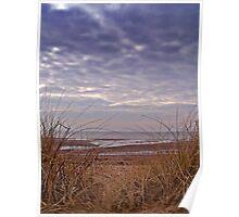 Wind Swept Beach Grass. Poster