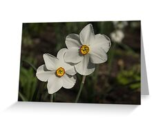 A Pair of Fragrant Poet's Daffodils, Celebrating Spring Greeting Card