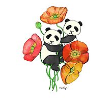 Poppies & Pandas Photographic Print