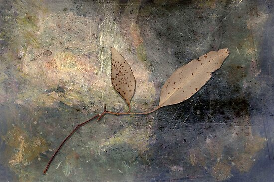 Gum leaves on an afternoon at home by Albert