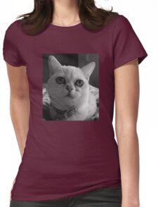 Cute kitten Burmilla in Grey Womens Fitted T-Shirt