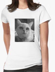 Cute kitten Burmilla in Grey T-Shirt