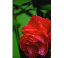 why I love the rain - reason # 57...  Photographic Print