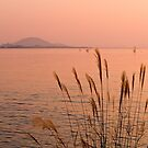 Sunset at Hikone on Lake Biwa, Japan. by johnrf