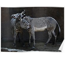 Zebra Encounter Poster