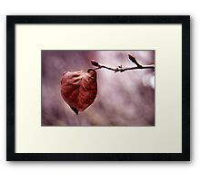 The last leaf.... Framed Print