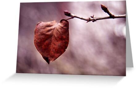 The last leaf.... by Steve Chapple