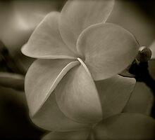 The lighter side of V... by linaji