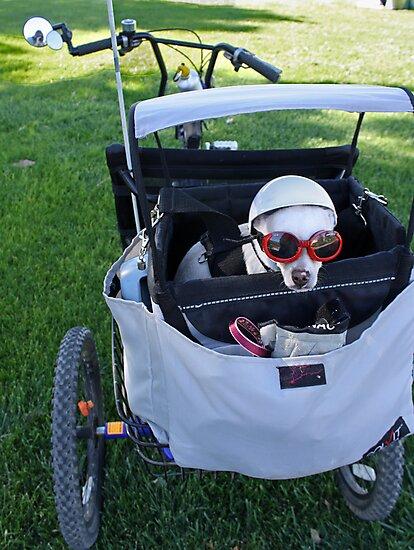 Chihuahua, the Biker Babe  by Corri Gryting Gutzman