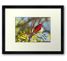 Playful Flycatcher Framed Print